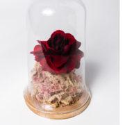 flor rosa bela e a fera vermelha 3