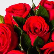 flores arranjo rosas vermelhas nacional 2_1