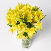 flores atromelia amarela vaso 4