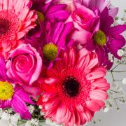 flores gerbera rosa margarida pink no vaso 2_1