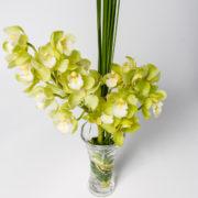 flores orquidea amarela vaso 3