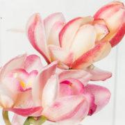 flores orquidea rosada no vaso 3_1